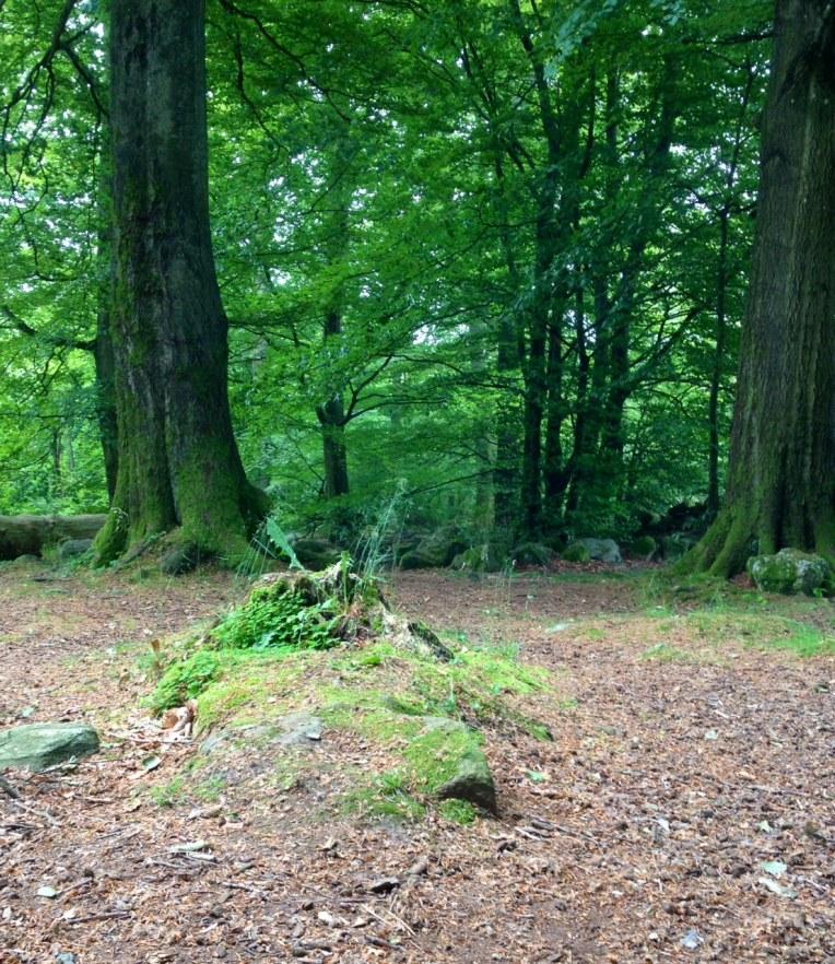 älva i skogen
